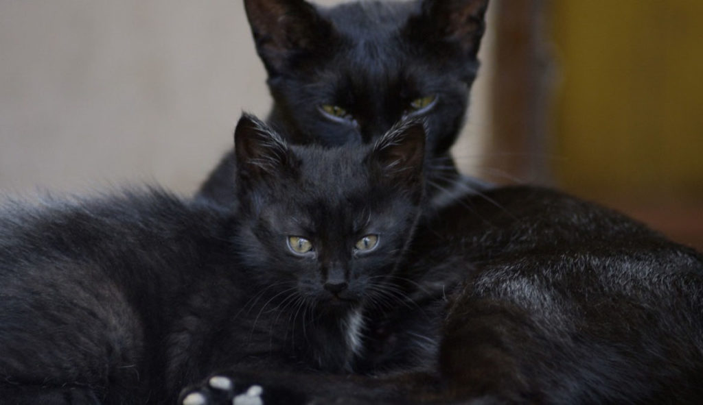 Мамы-кошки очень чувствительны к каждому шороху, чтобы не встревожить их, избегайте резких звуков