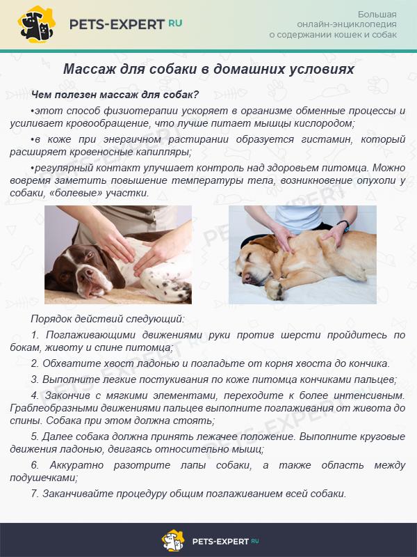 Массаж для собаки в домашних условиях