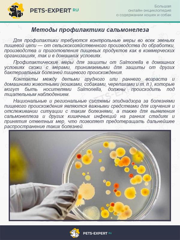 Методы профилактики сальмонелеза