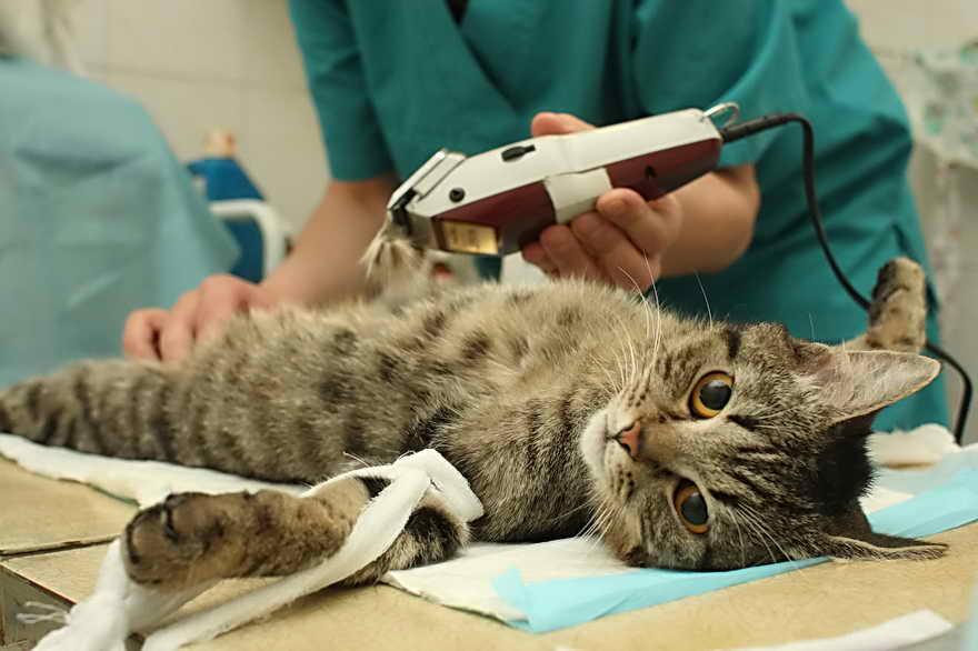 Многие ветеринары советуют при стерилизации избавляться как от яичников, так и от матки