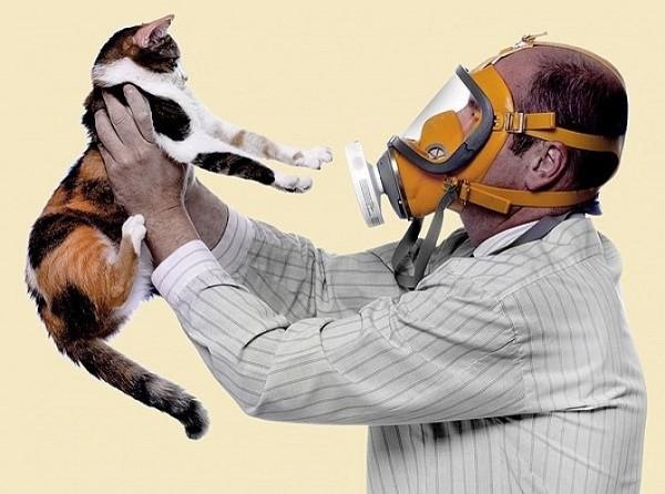 Можно ли купировать аллергию на кошек при помощи лекарственных препаратов?