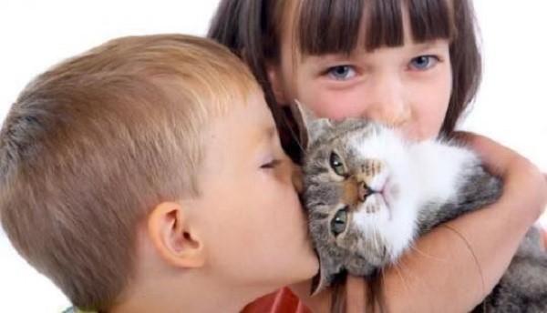 Если ваш ребенок начал контактировать с кошкой в раннем возрасте, он может быть подвержен аллергии, однако, намного меньше, чем его сверстники, которые никакой предрасположенности к этому не имеют