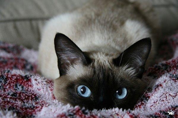 Мотивы агрессии даже самого злобного кота заключаются в желании выжить