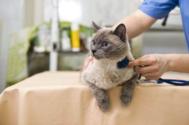 Назначить правильное лечение может только ветеринар