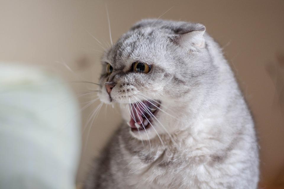 Найти общий язык с котом предстоит каждому хозяину с помощью лекарств, или без них
