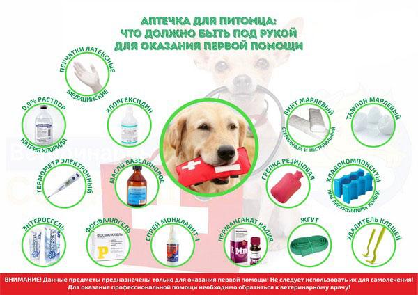 Необходимые предметы для оказания первой медицинской помощи собаке