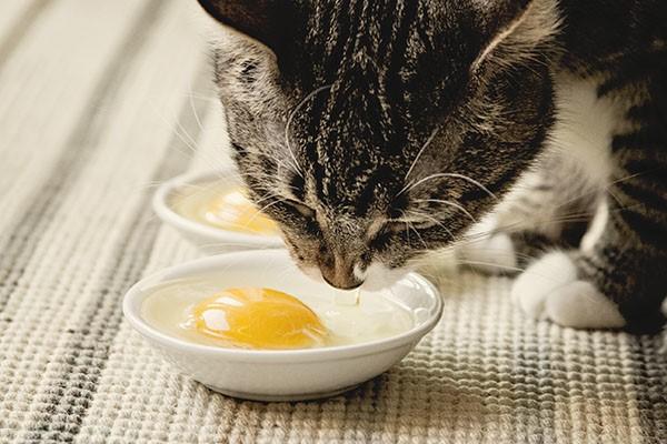 Нередко кошки сами чувствуют нехватку конкретного витамина и тянутся к определённым продуктам