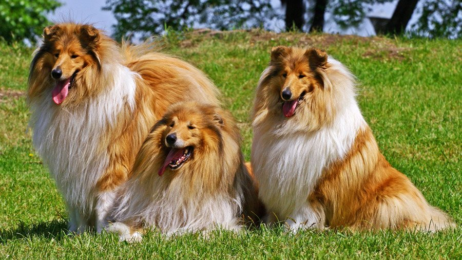 Не все породы собак переносят ивермектин