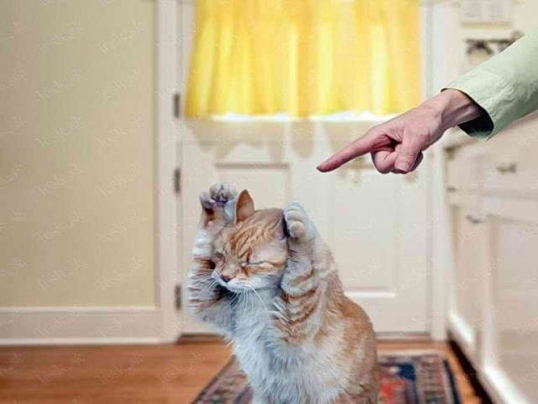 Не ругайтесь на кошку!