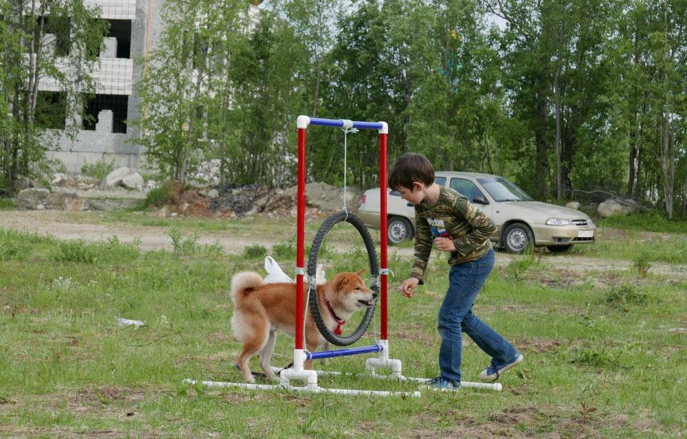 Тренровки на любительском уровне собаке поддерживать физическую форму