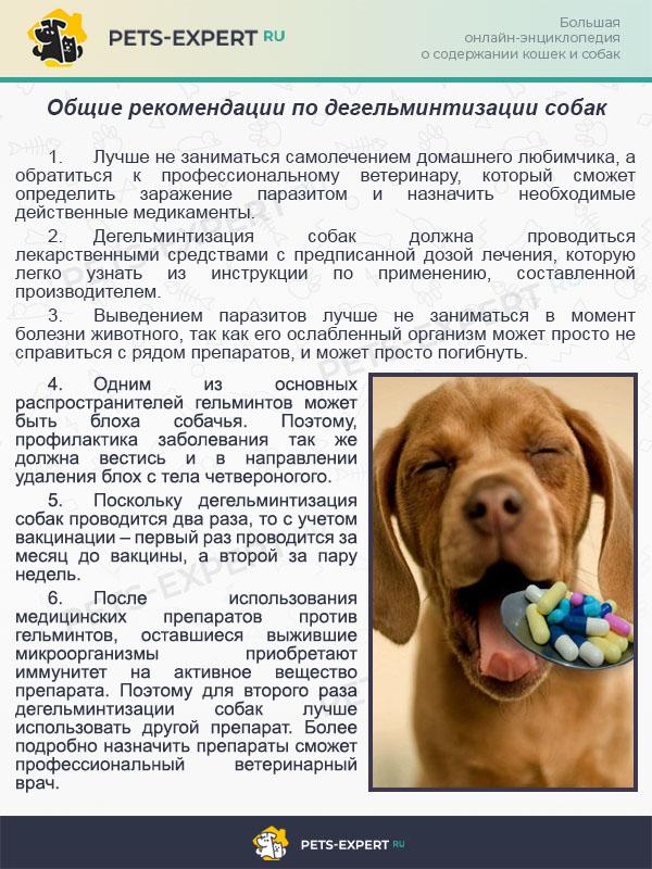 Общие рекомендации по дегельминтизации собак