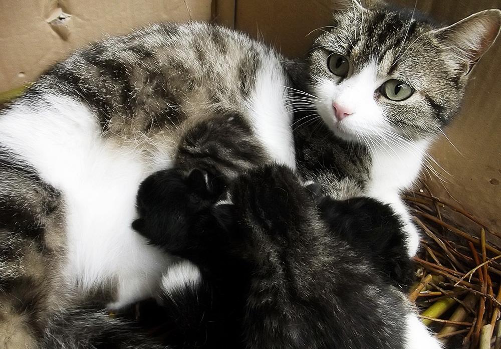 Один из удобных способ перемещения для паразитов - через материнское молоко
