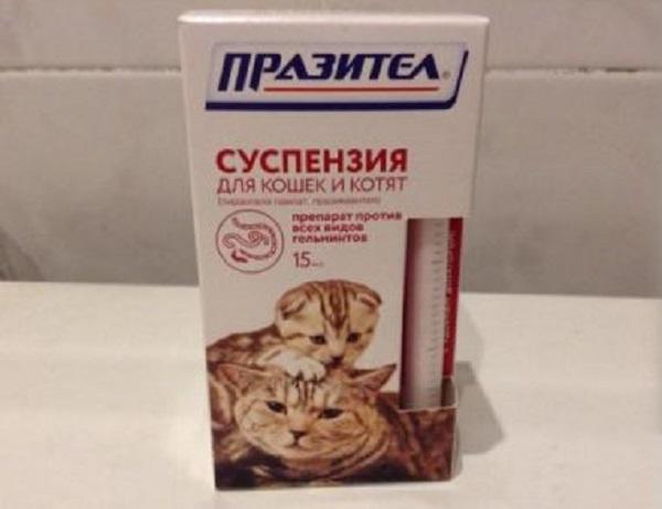 Однократного приема празитела, как правило, достаточно для выздоровления кота