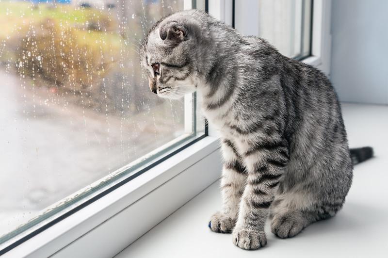 Окруженным заботой котам все равно не хватает общества дворовых обитателей