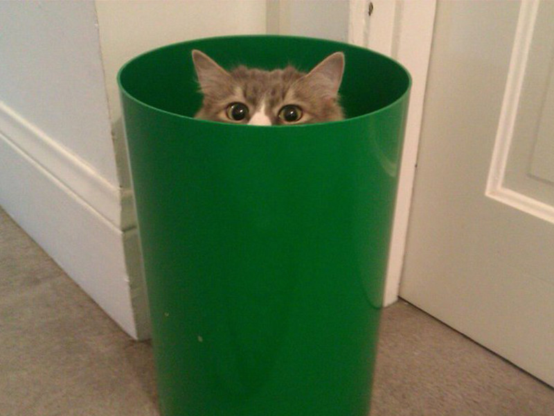 Опасность коты предпочитают пережидать в укромных местах