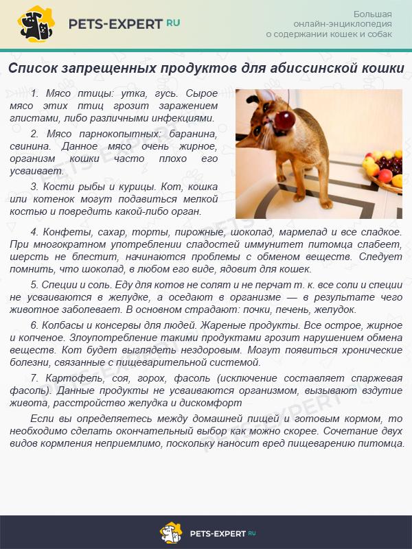Опасные продукты для абиссинской кошки