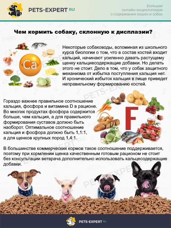 Особенности рациона для собак, склонных к дисплазии