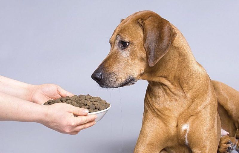 Отказ от еды - важный симптом болезни собак