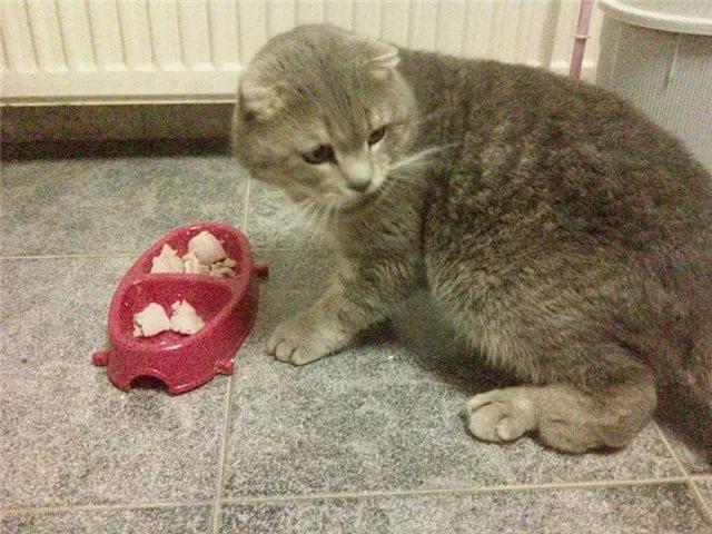 Отказ от пищи может сигнализировать о проблемах со здоровьем у кошки