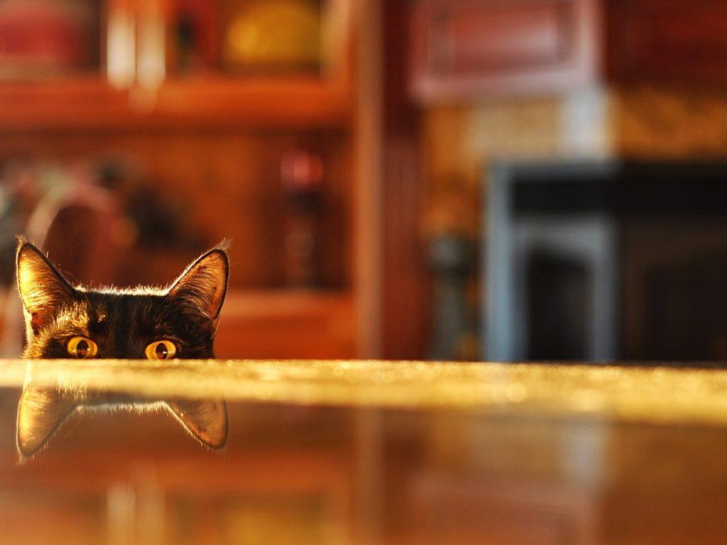 Отсутствие предметов на столе существенно понизит интерес кота