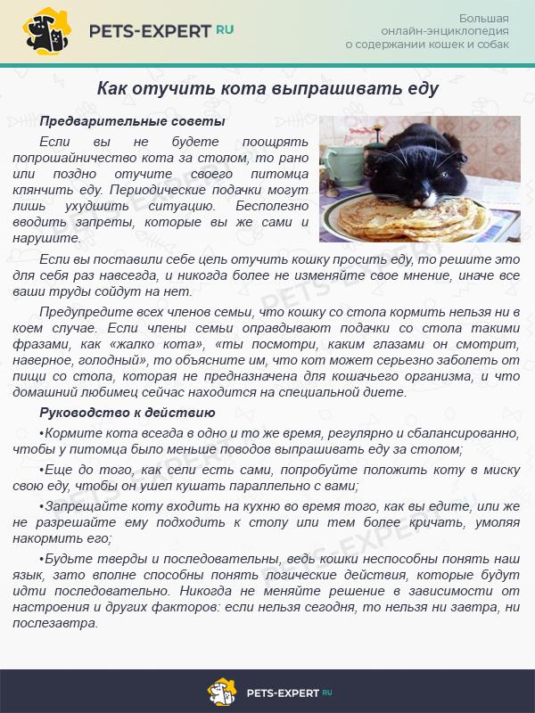 Отучаем кота выпрашивать еду