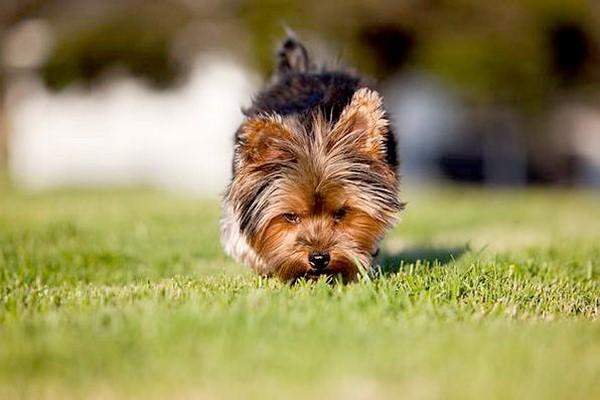 Отучить собаку брать с земли пищу непросто, но возможно