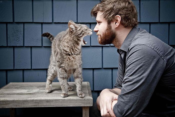 От кошки можно заразиться глистами, лишаем, токсоплазмозом