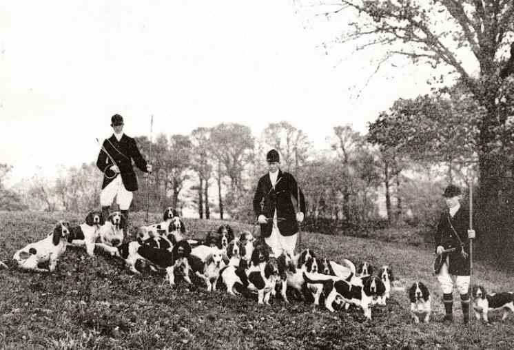 Охота с бассетами, Англия, 1935 годОхота с бассетами, Англия, 1935 год