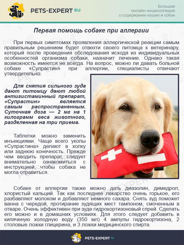 Первая помощь собаке при аллергии