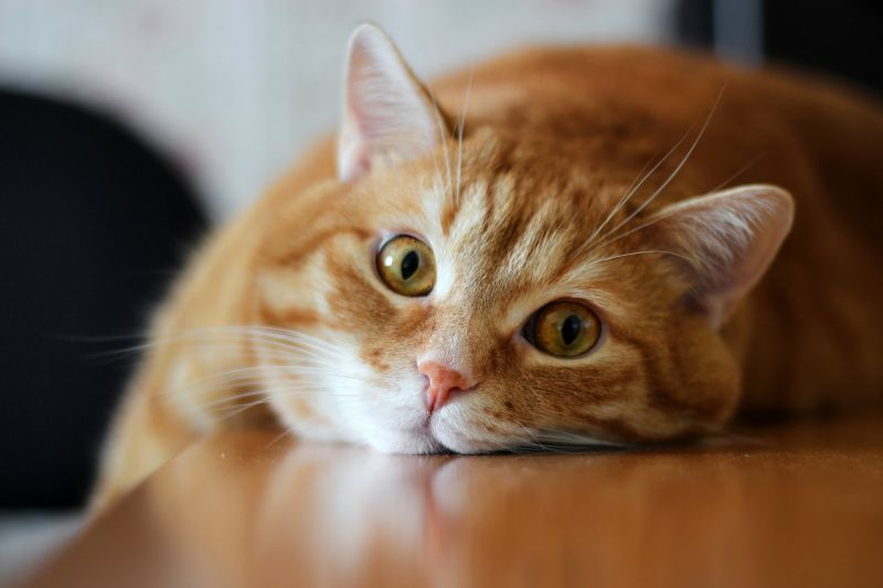 Перед тем, как начать операцию по удалению кота со стола, необходимо разобраться в том, что его привело туда