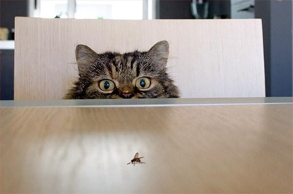 Переносчиками гельминтов могут быть насекомые, случайно оказавшиеся в квартире