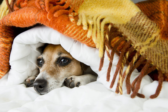 Переохлаждение собаки - одна из причин бордетеллеза