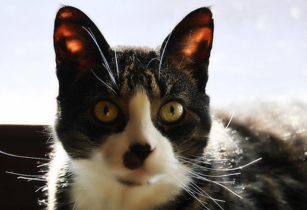 Периодический осмотр ушей питомца станет надежной профилактикой ушных паразитов