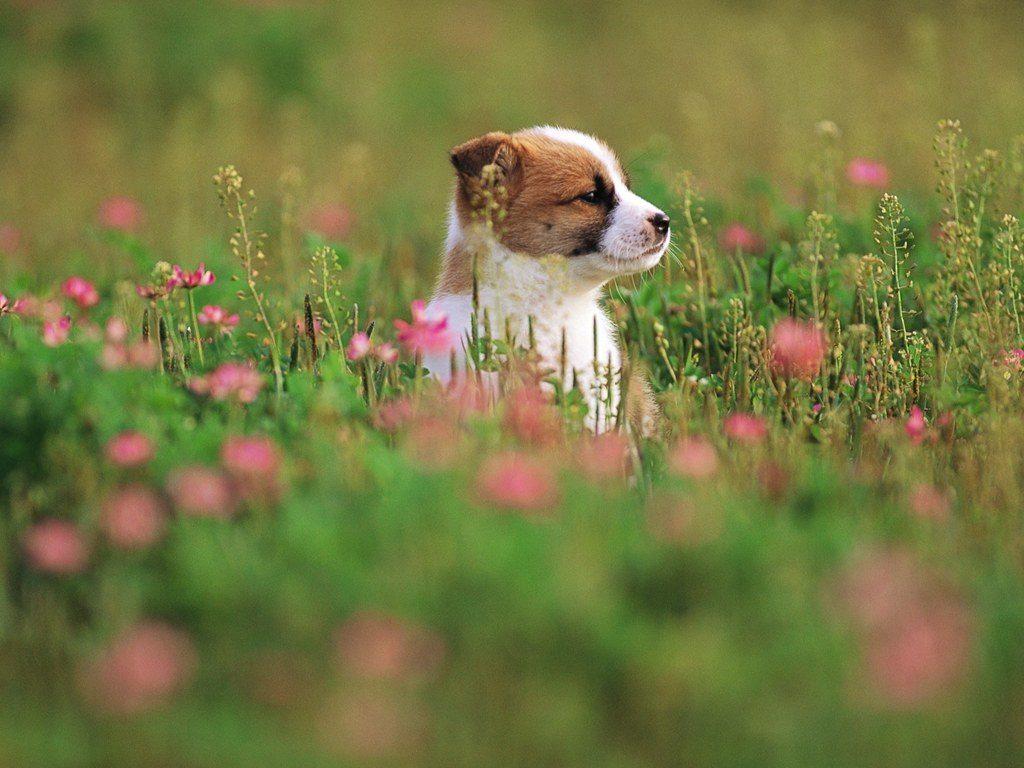 Период цветения - опасное время для питомцев-аллергиков