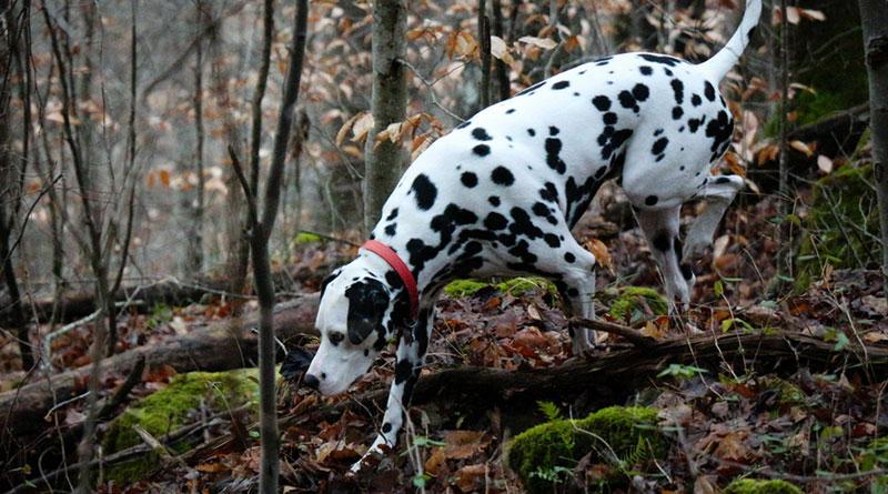 Питомцы, часто бывающие в лесу, попадают в группу риска по заражению эктопаразитами