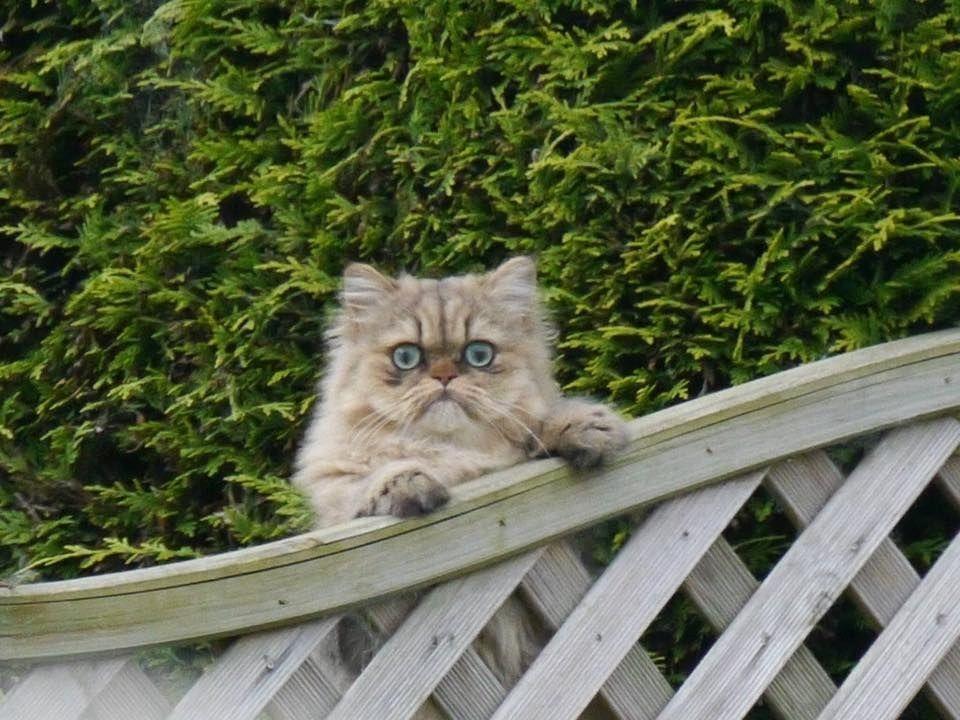 Плановая обработка котов от блок станет отличной профилактикой от глистов