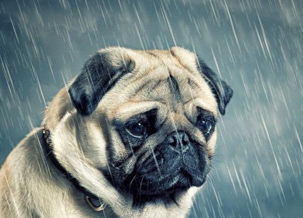 Плохая погода может стать для собаки причиной нежелания продолжать выгул