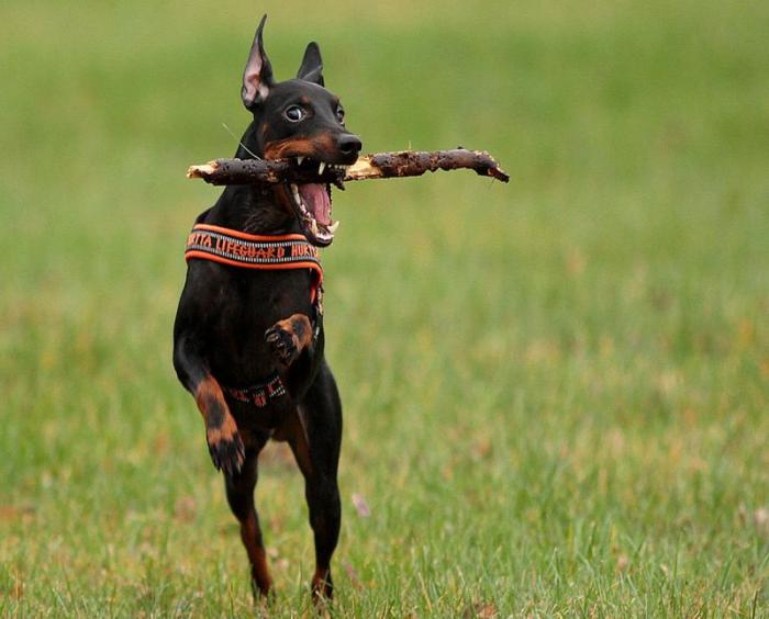 Подвижные игры – залог гармоничного развития собаки