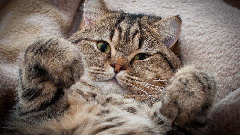 Позволить себе такую уязвимую позу кот может только в кругу самых близких