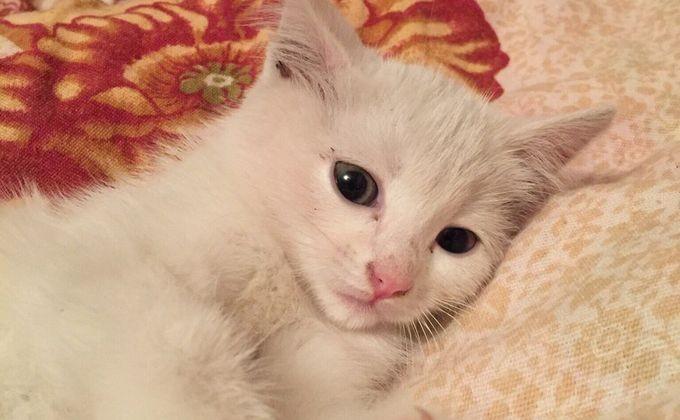 Понаблюдайте за реакциями котенка на разные имена и выберите то, которое получило отклик