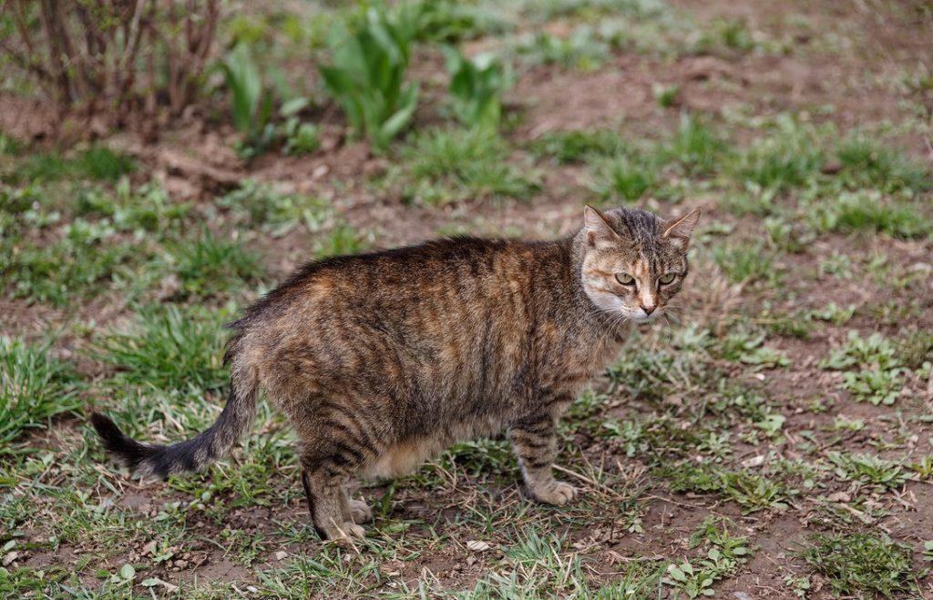 После уличных приключений кот может принести с собой не только грязь, но и заразные болезни