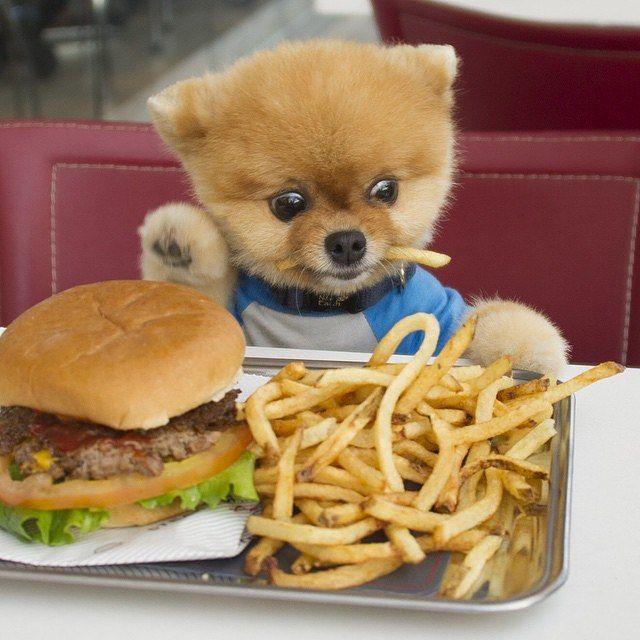 Почти все блюда с хозяйского стола не предназначены для ЖКТ шпица, несмотря на то, что он думает иначе