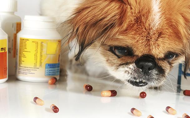 По возможности не допускайте передозировку Ципроветом у собак, убирая его в недоступные для питомца места