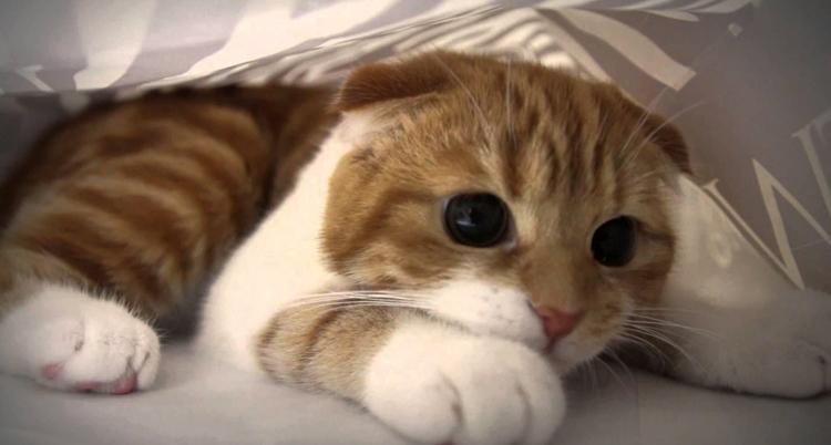 По возможности советуется избегать касаний кота в такие моменты - они спровоцируют приступ агрессии