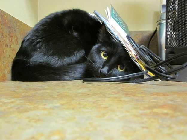 Правильное решение при охватившем кота аффекте - переждать его в комфортных для питомца условиях