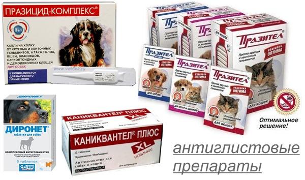 Препараты для лечения глистов у собаки