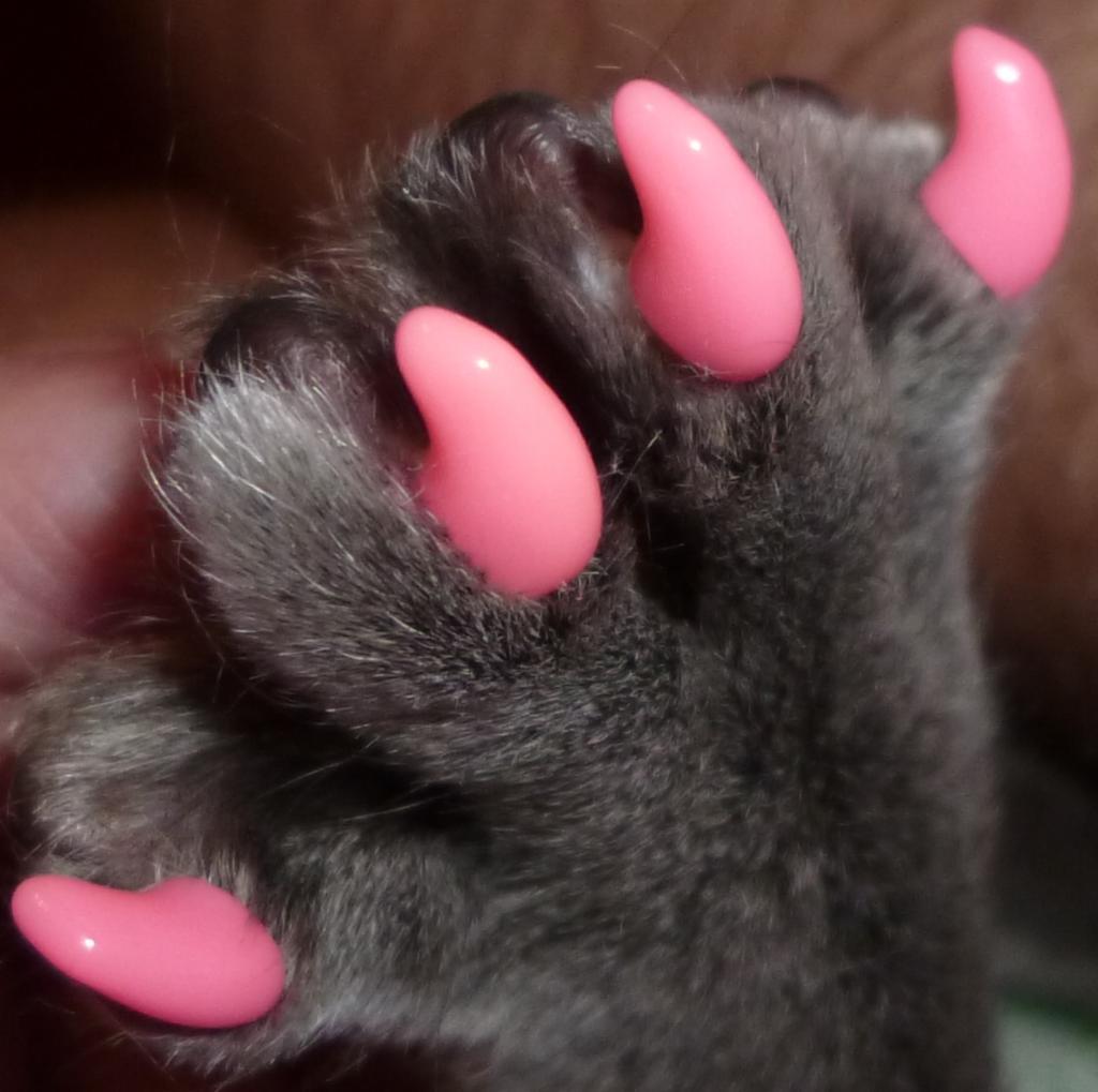 Привыкнуть к антицарапкам - настоящее испытание для кота