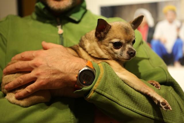 Приготовьтесь к тому, что воспитание маленькой собаки займет ничуть не меньше времени, чем воспитание большой