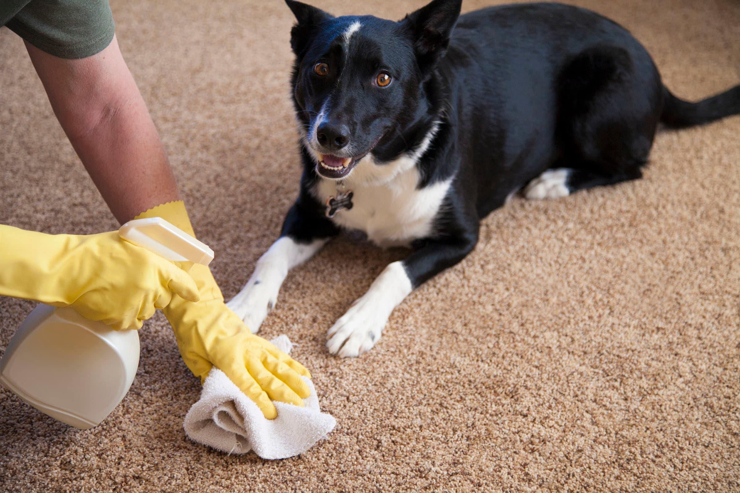 Народные средства лечения недержания мочи у собаки thumbnail