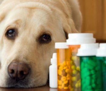 Причина, вызывающая дерматит у собак, имеет аллергическую основу
